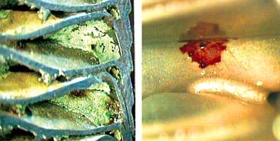 Corrosion of copper and stainless steel